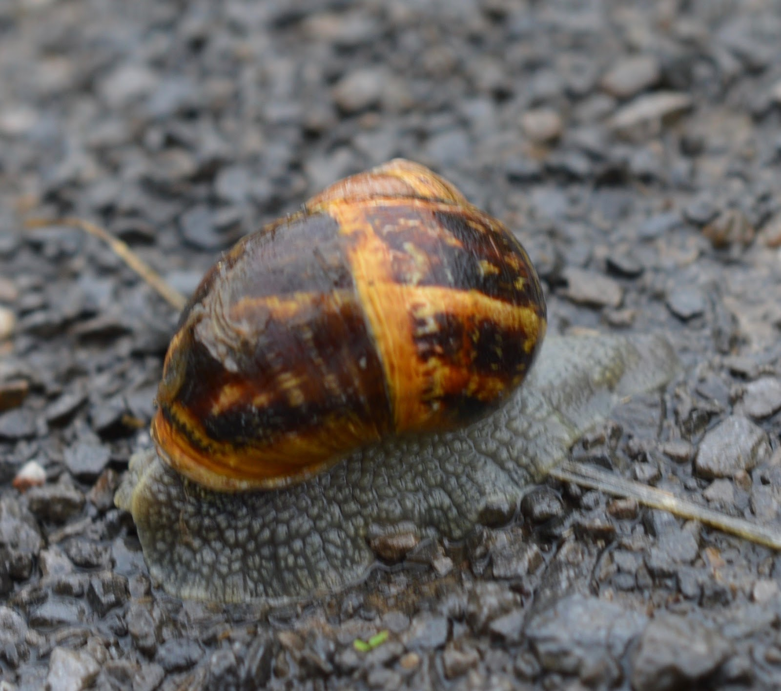 FREE Nature Trail at Derwent Waterside Park, Consett  - snail
