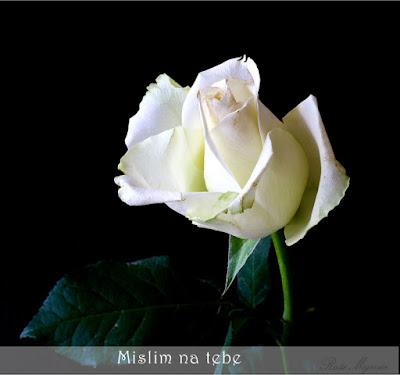 """Buket belih ruža je savršen način da se kaže """"Mislim na tebe""""."""