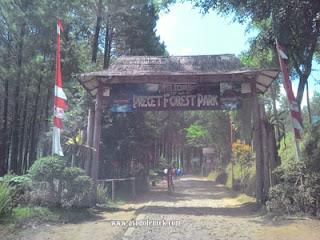 Pintu gerbang Hutan Pinus Precet, Wagir, Malang