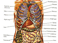 Body Parts Diagram