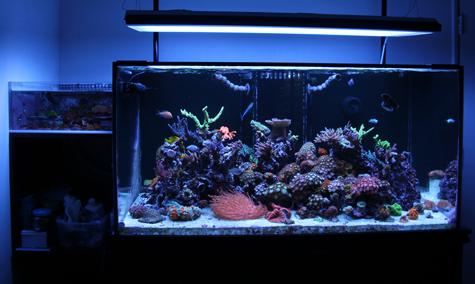 Featured Reef Tank Cody S 120 Gallon Zoa Garden Marine