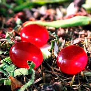 Manfaat Dan Khasiat Batu Mustika Merah Delima