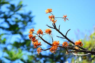 poro tree