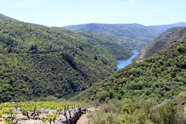 ribeira-sacra-camino-de-santiago-de-invierno-vides-rio-sil