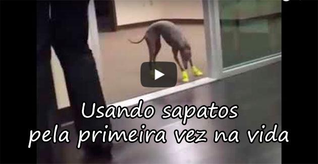 https://www.naointendo.com.br/posts/ex5ctdc2zec-usando-sapatos-pela-primeira-vez