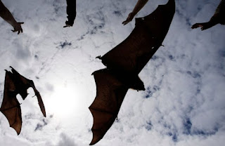Know Nipah Virus, Deadly Virus That Came from Bats