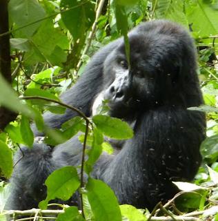 12 Days Uganda rwanda gorillas, lake bunyonyi,nyungwe chimps, rwanda primates and wildlife Safari, uganda rwanda luxury tour,long luxury safari rwanda uganda, long wildlife tour safari rwanda uganda, 12 days primate tour rwanda uganda, uganda rwanda gorilla safari, budget tour rwanda uganda