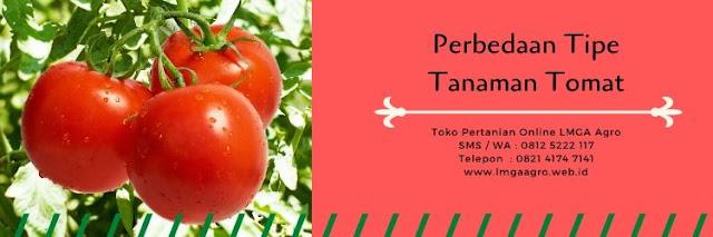 benih tomat betavila,tomat betavila,tomat indeterminate,tomat determinate,jual,harga murah,benih tomat,budidaya tomat,lmga agro