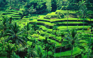 All About Bali Rice Terrace in Tegalalang