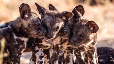 Serengeti 2019 Image 2