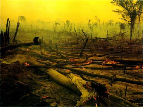 Desmatamento vai aquecer ainda mais o clima do planeta