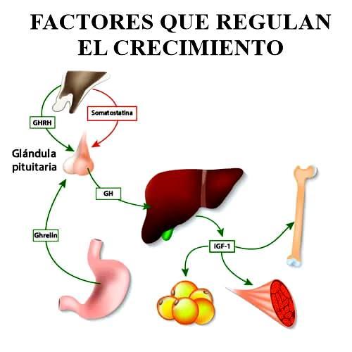 Factores que son capaces de regular el crecimiento celular