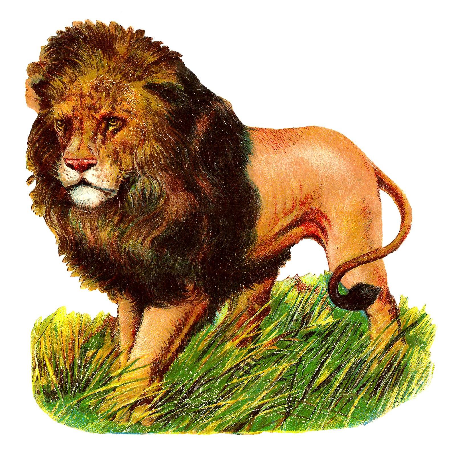 Antique Images: Wild Lion Stock Image Digital Animal ...