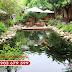 Thiết kế hồ cá koi - Hồ cá koi sân vườn đẹp tại Cát Tường Koi