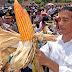 Sejarah Bangsa! Indonesia Sudah Tidak Impor Jagung Lagi, Konsumsi Produk Petani, Rakyat Menang!
