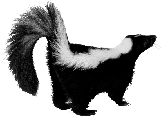 Nonsensible Shoes: Skunk Vs. Dog (a Personal, Non