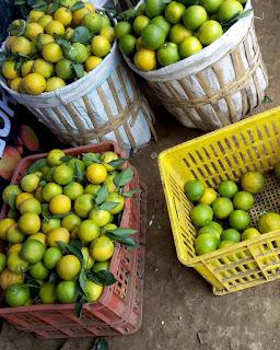 Wisata Petik jeruk varietas Baby ada tiga, Java paling manis, Pacitan paling segar,Valencia berasa asam, Jeruk keprok batu 55