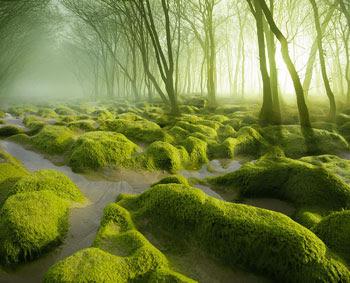 Gambar Hutan Terindah di Dunia 7