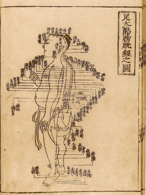 Acupuncture needle placement chart