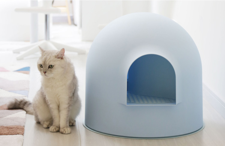 Introduce a Cat to a New Litter Box