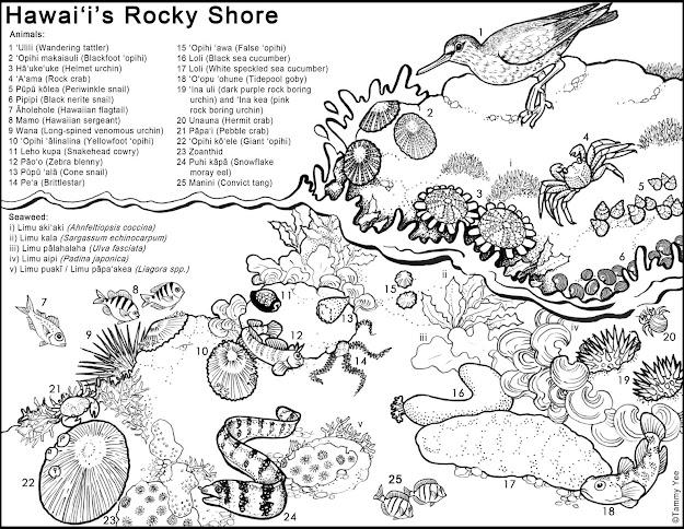 HD Hawaiian Fish Coloring Pages Drawing - Coloring Pages ...