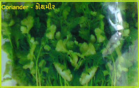 coriander seeds in ahmedabad