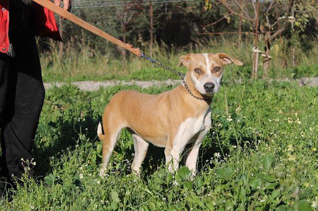 Χάθηκε σκυλίτσα στην περιοχή της Παραμυθιάς