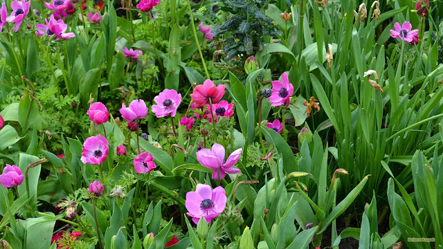 Wallpaper met roze bloemen in de lente