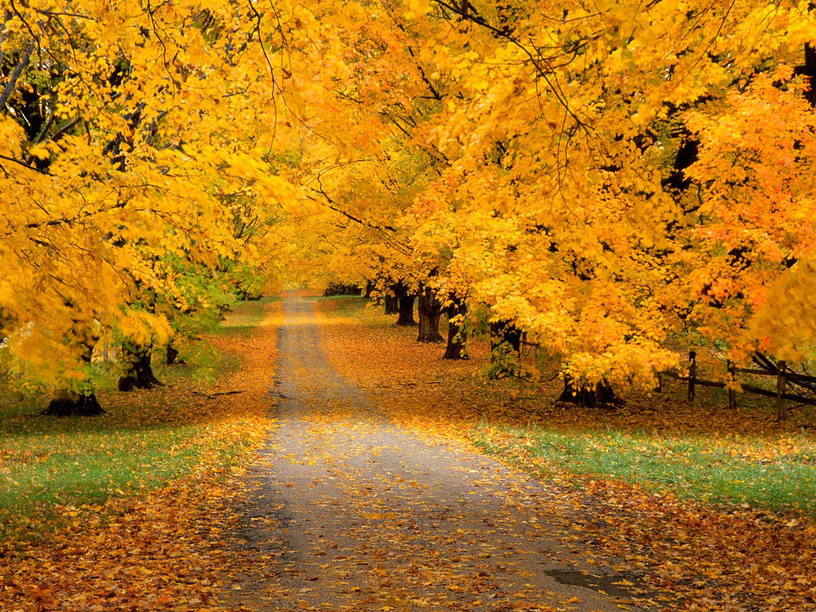 High Resolution Fall Wallpaper: Click To See World: Best Autumn Wallpapers