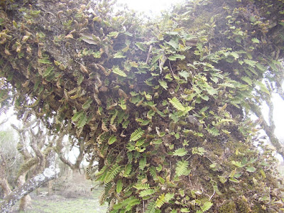 plantas trepadoras de argentina