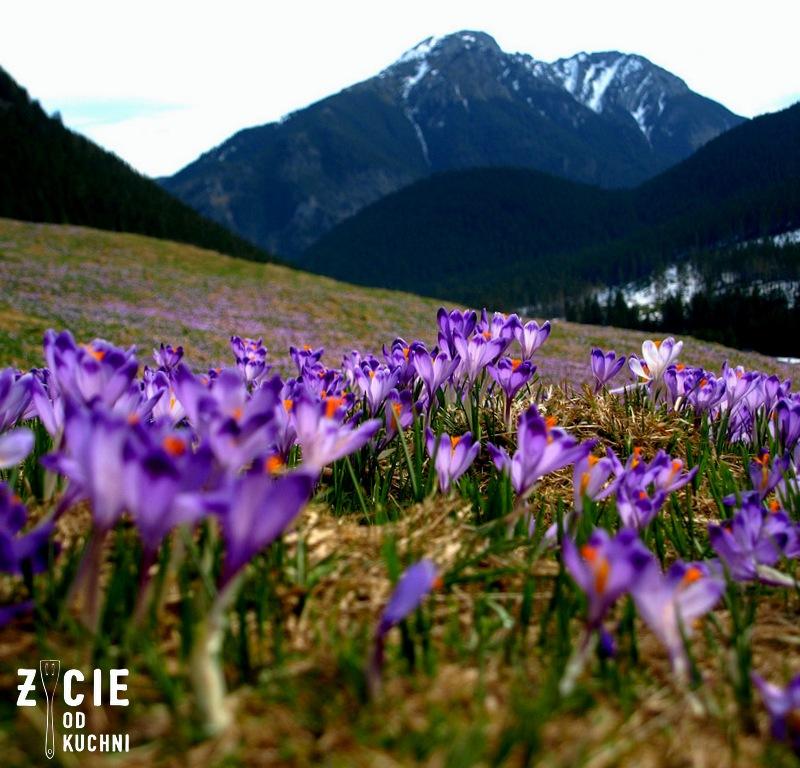 wiosna, tatry, dolina chocholowska, krokusy, gory, wycieczka, blog, zycie od kuchni