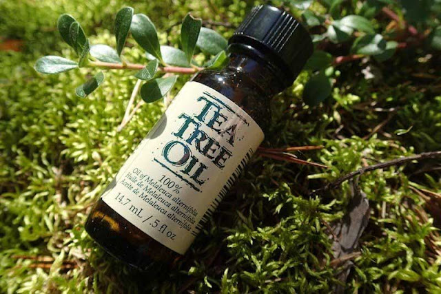 Top 10 Tea Tree Oil Uses Should Make It a Permanent Part of Our Medicine Cabinet