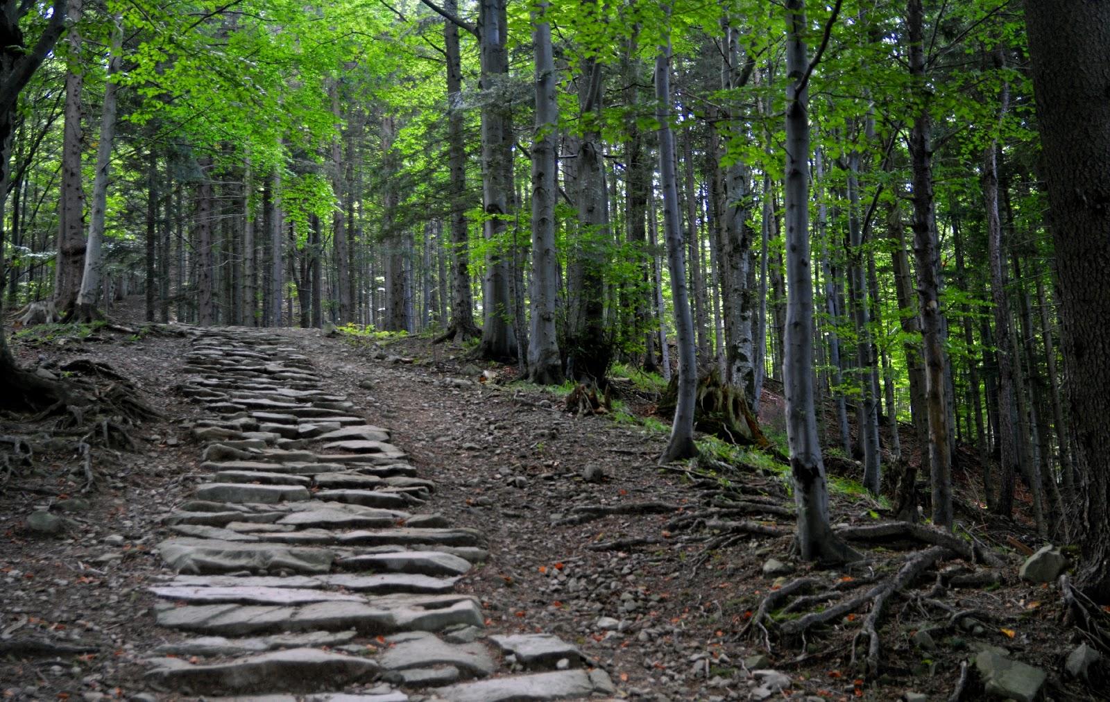 Beskid Żywiecki Szlak na Markowe Szczawiny z Zawoi