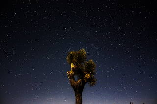 night sky joshua tree national park
