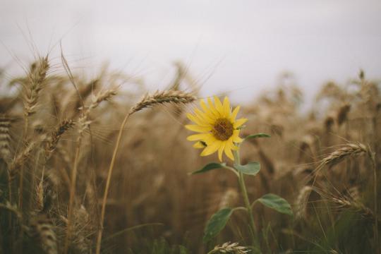 101 Thơ về hoa dại, Các bài thơ ngắn hay về hoa cỏ dại không tên