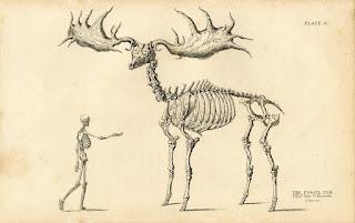 Esqueleto Megaloceros giganteus
