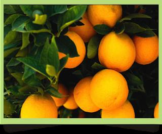 Buah-buahan Penambah Darah Untuk Penderita Anemia