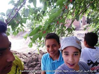 الحسينى محمد , الخوجة , بركة السبع , المنوفية,التوت,اكل التوت ,فوائد التوت