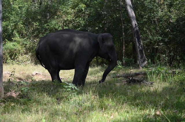 elephant retreats nagarhole