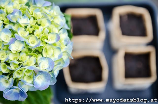 Blumentöpfe aus Milchtüten