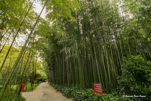 Avenida de Bambú en la Bambouseraie de Cévennes, Francia por El Guisante Verde Project