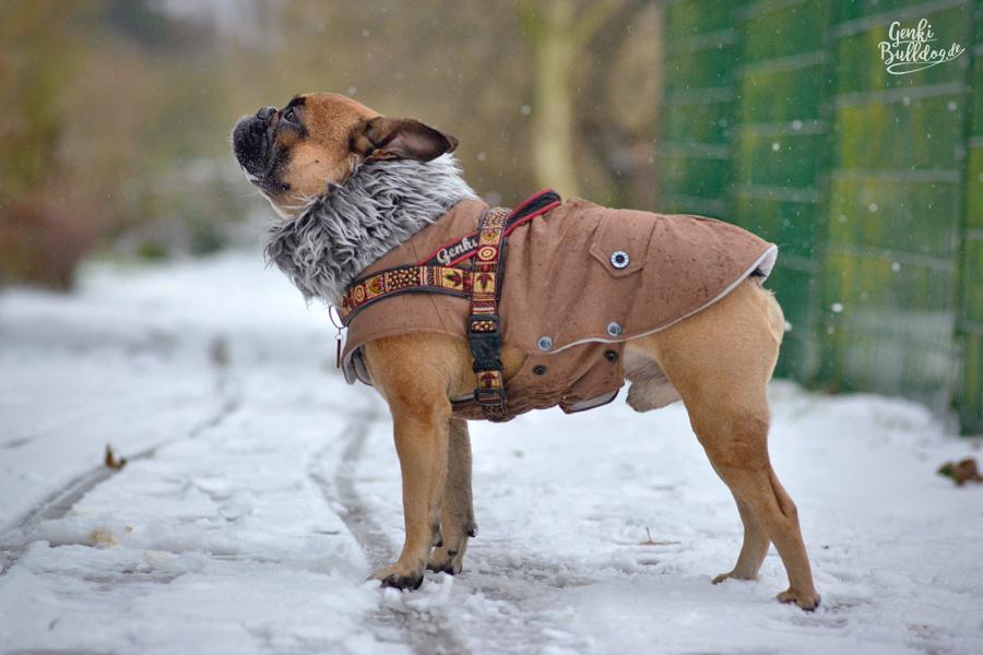 Wintermantel Winterjacke pullover jacke anziehsachen kleidung warm französische bulldogge Mops Größe Doggy Dolly Hundemantel Hundebekleidung Bullymantel Bullyjacke Bulldoggenmantel Mopsmantel
