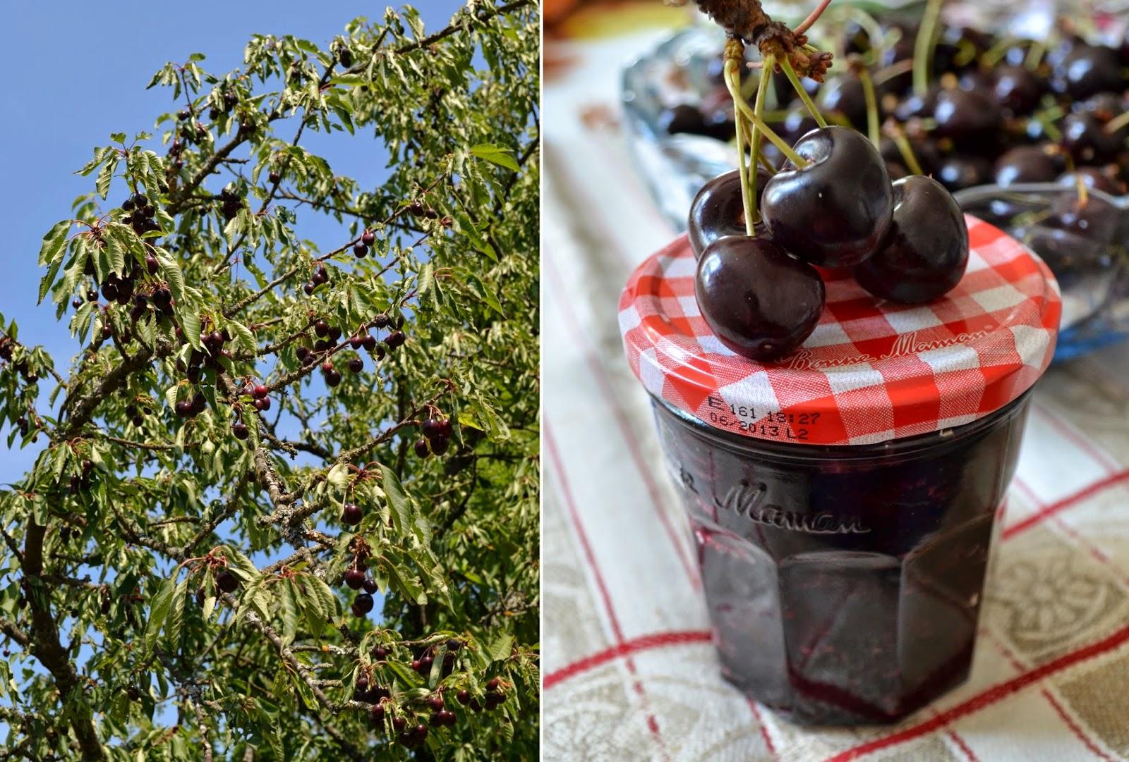 Confiture de cerises à la menthe