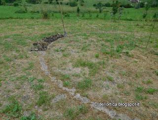 erbe aromatiche e oficinali nel giardino della fattoria didattica dell ortica a Savigno Valsamoggia Bologna vicino Zocca appennino