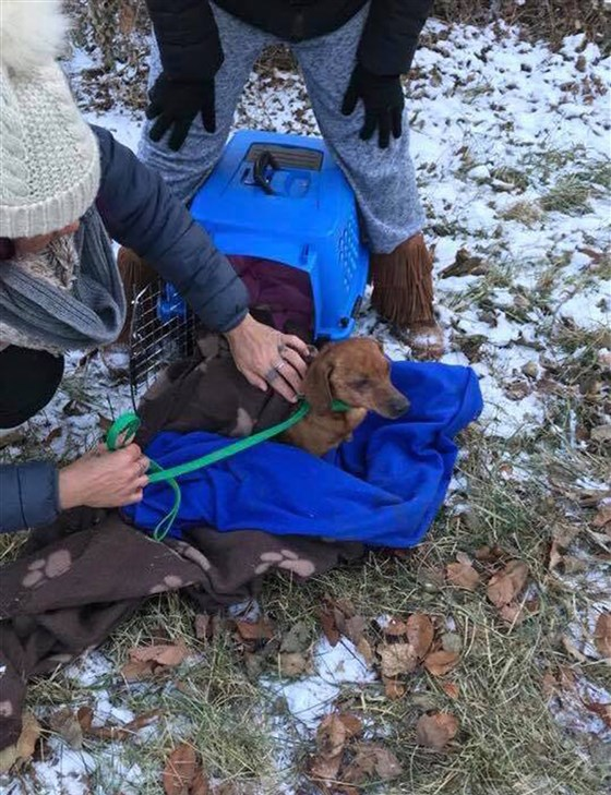 Dog dumped in bag on frigid night learns to trust again: 'You're safe'