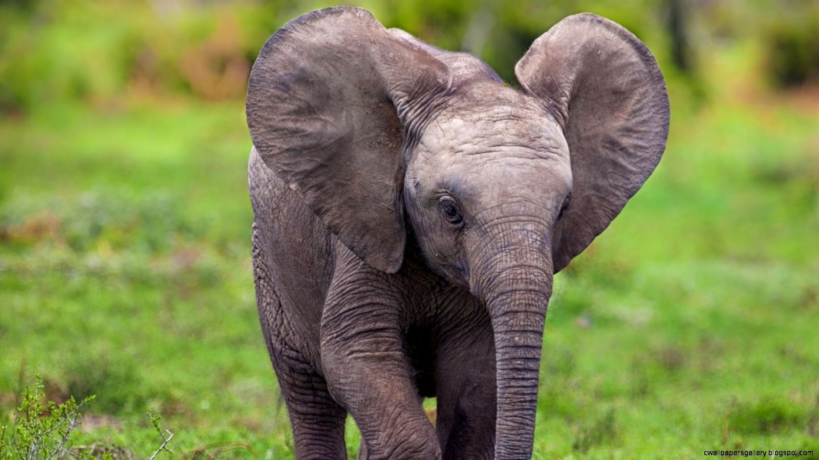 Baby elephant wallpaper for iphone wallpapers gallery - Elephant background iphone ...