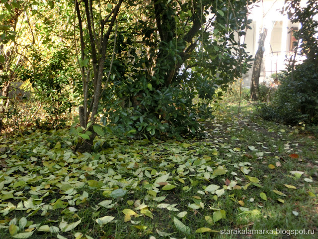 осень в венгрии, отзывы о жизни в будапеште, недвижимость в венгрии
