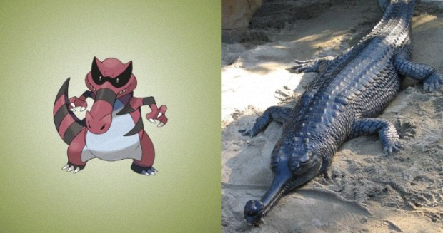 Krookodile is a gharial