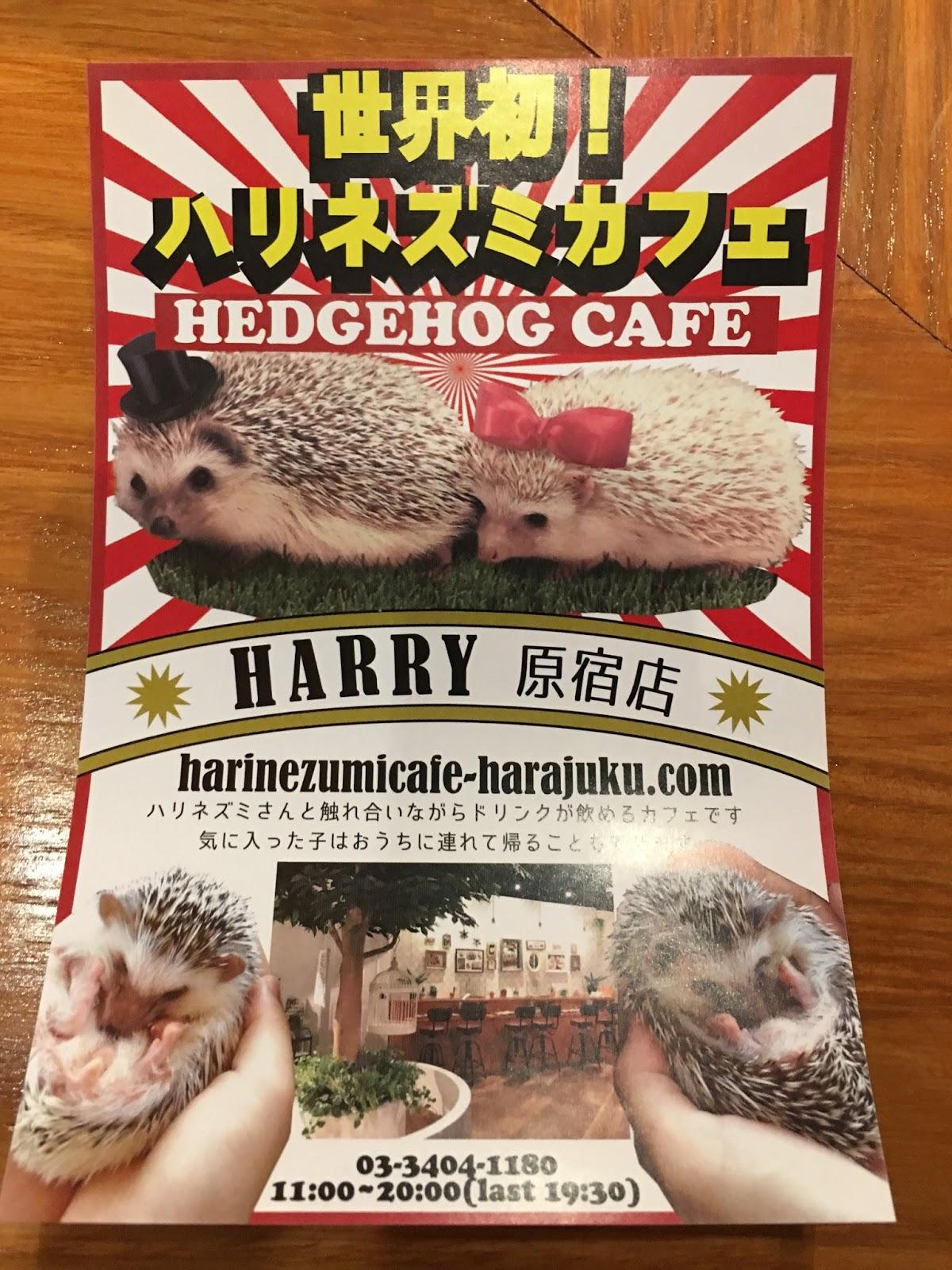 Great Eats Hawaii Hedgehog Cafe Tokyo Japan