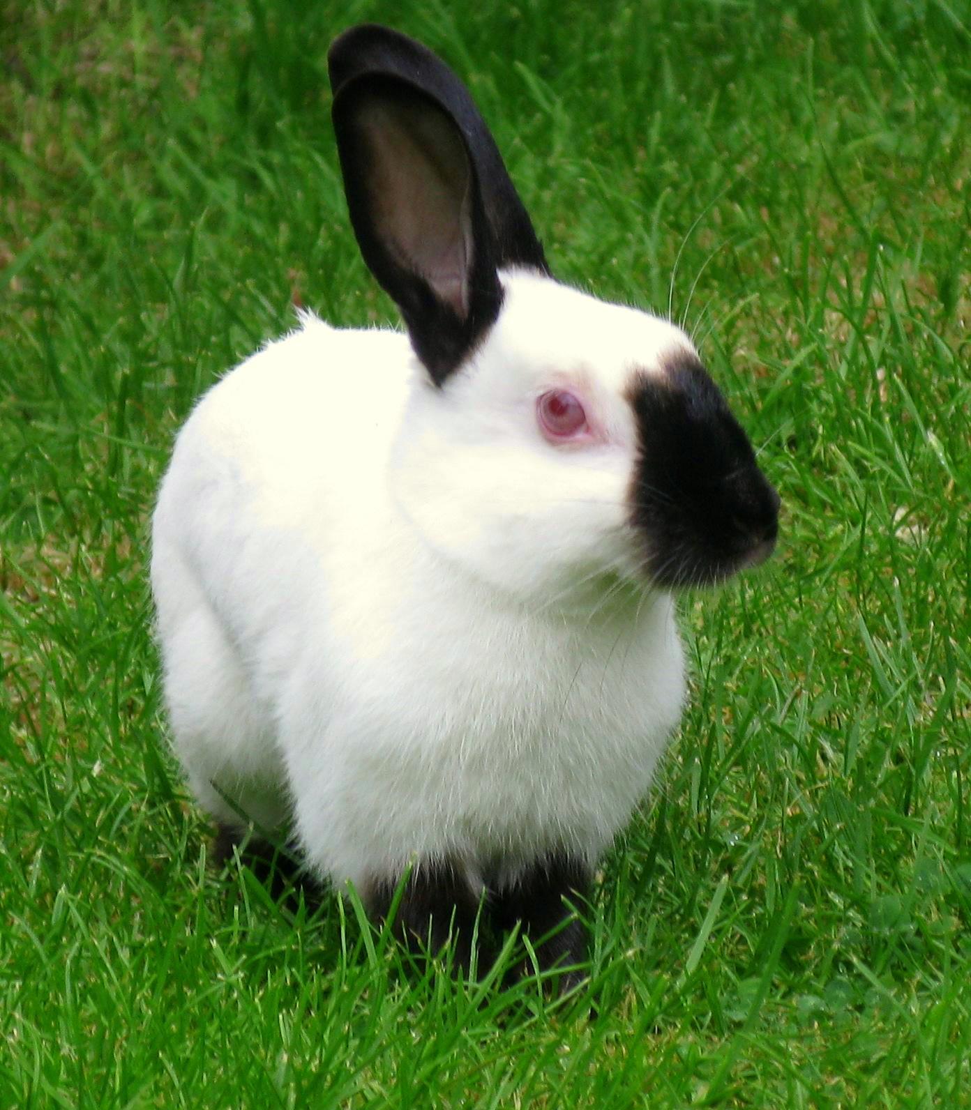 PETS: Type Of Bunny Rabbit